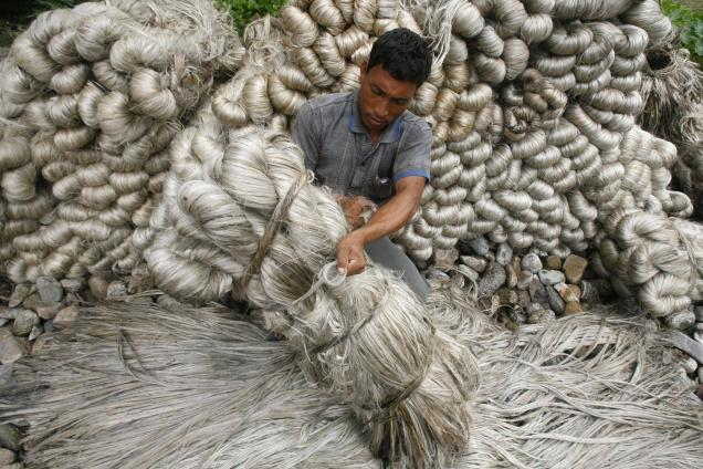 Jute factories in Bengal